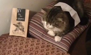 Even the cat likes it!